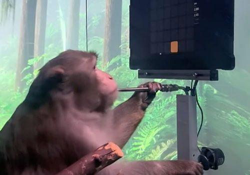 एलन मस्कको कम्पनी न्यूरालिंकको 'ब्रेन चिप' बाँदरमा प्रयोग, आफ्नै दिमागले भिडियो गेम खेल्दै